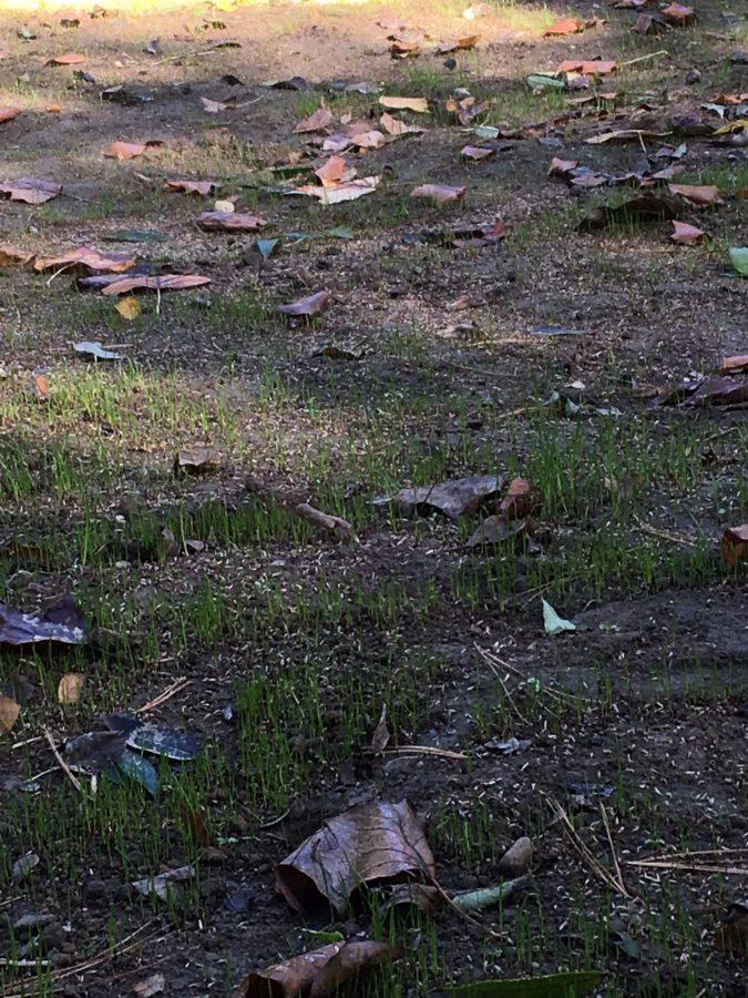Der erste Rasen sprießt