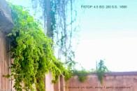 Srishty Agarwal-4
