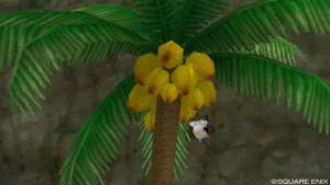 ヤシの木なった実をチューチューしている草食なモーモン
