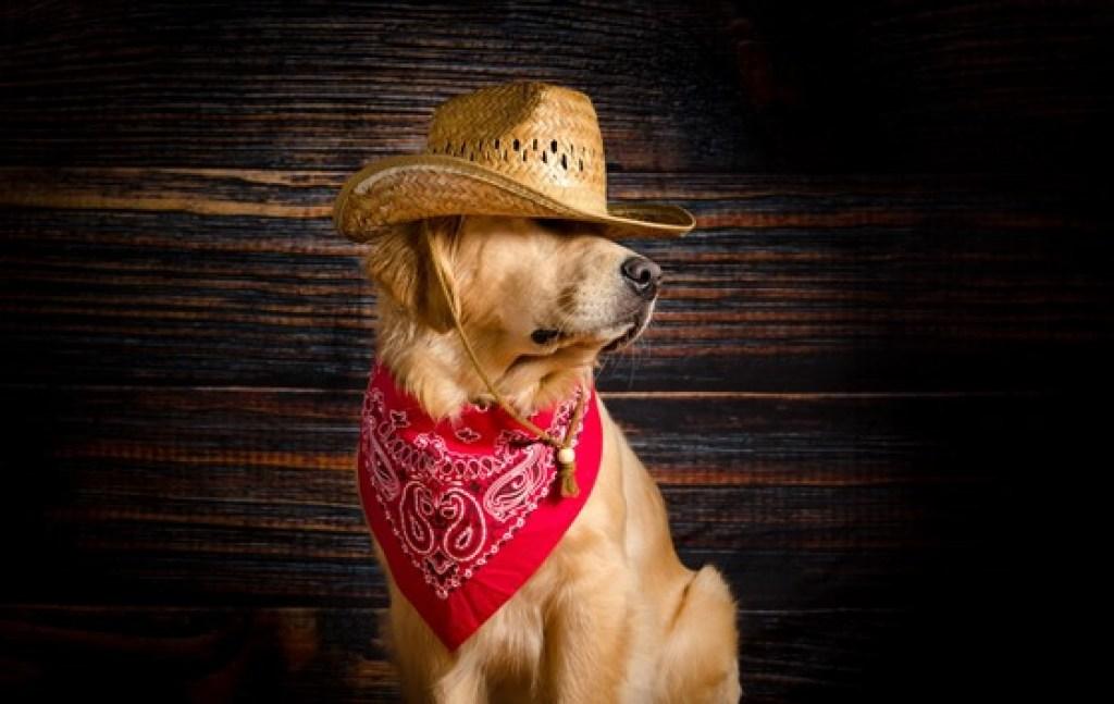 Κομμωτήριο Σκύλων Βύρωνας