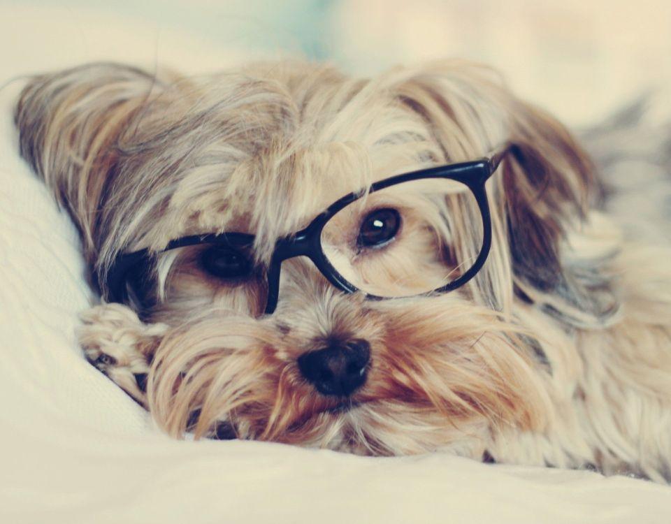 Κομμωτήριο Σκύλων Βούλα