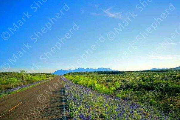 Blue Bonnet Road 00008