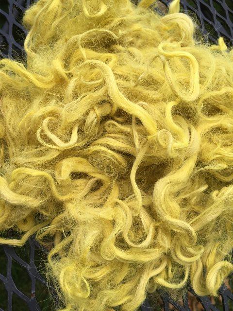 Hand-Dyed Suri Alpaca Fiber, 4 Inches, Daisy 17921