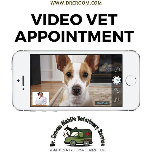 Video Veterinary Appointment--30 minutes