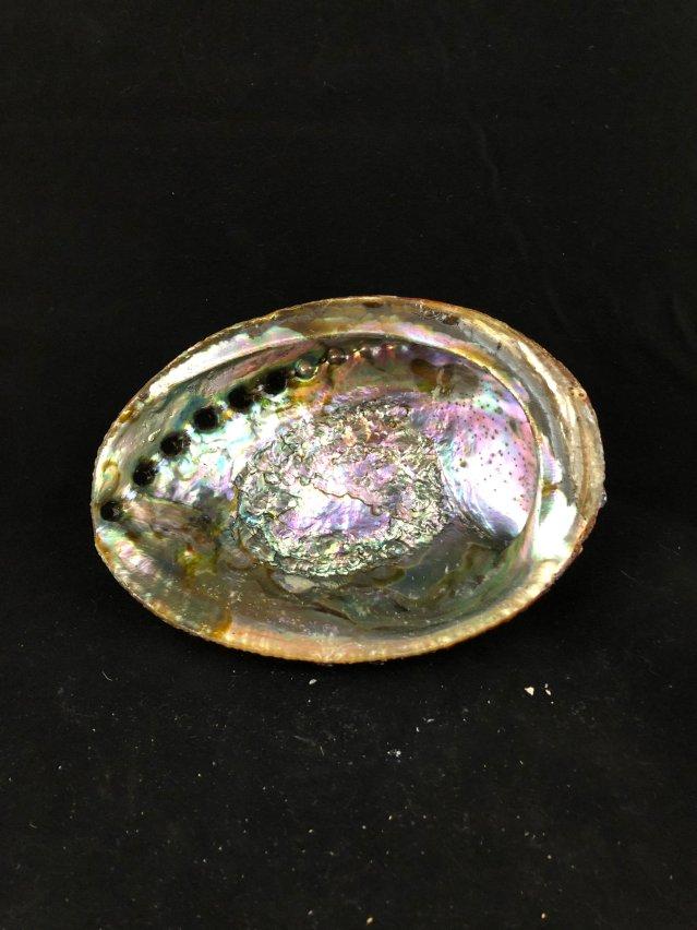 Abalone Shell MP139