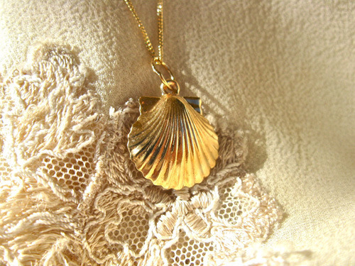 Back of the scallop shell