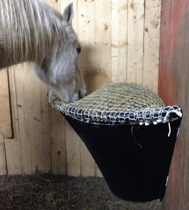 Horse Corner Net A