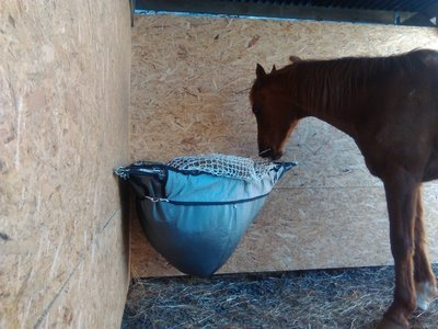 Optimal Horse C-mesh