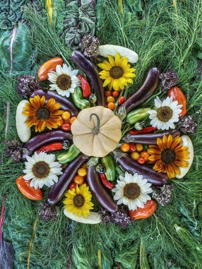 Fennel Flower Sun- Poster Edition HSO000180301