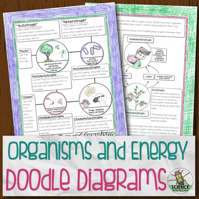 Organisms and Energy Doodle Diagrams