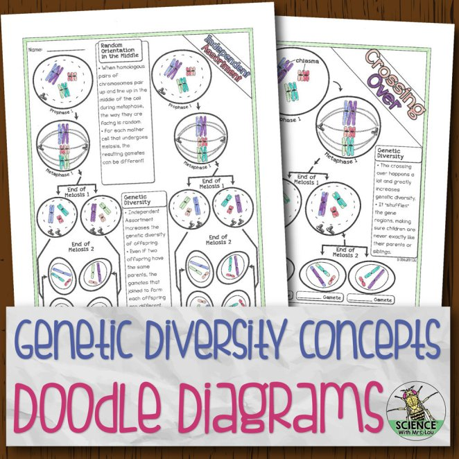Genetic Diversity Doodle Diagrams