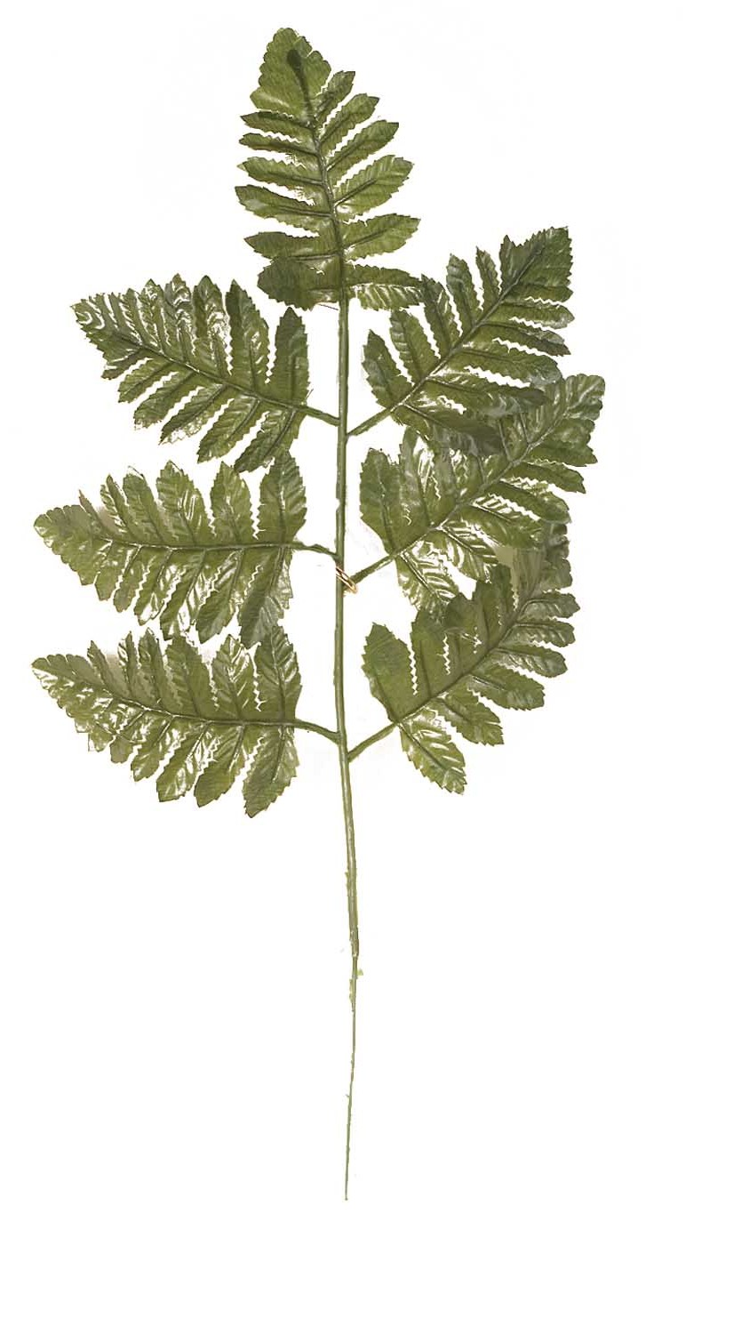 "SBG6112 - 17"" Tall Dark Leather Fern Stem ""dozen"" $2.85 a dozen SBG6112"