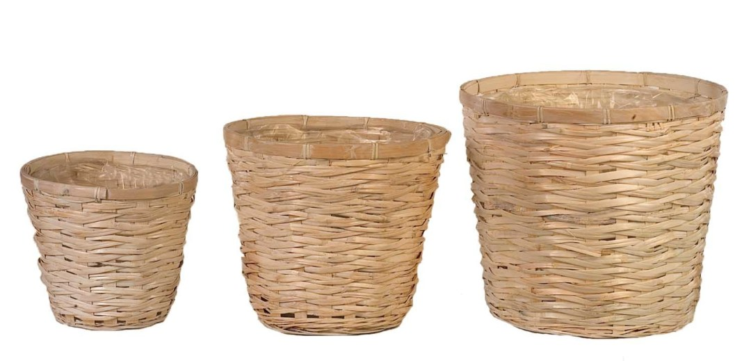 """MS1117WW - 8"""" WW Bamboo ( fit 6"""" pot) $2.20 each 