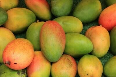 ማንጎ Mango (Ethiopia Only)