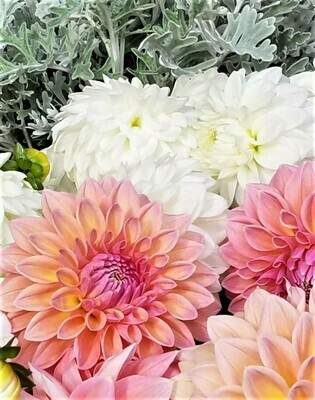 Dahlia Fall Flowers Share