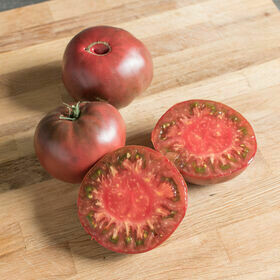 Cherokee Purple Tomato Plant