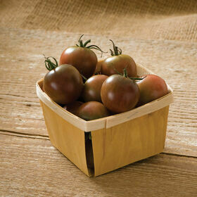 Black Cherry Tomato Plant