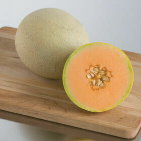Cantaloupe Plant