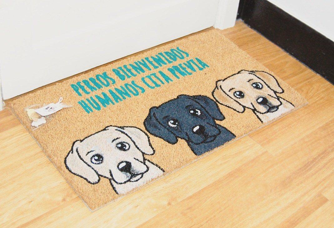 3 Labradores