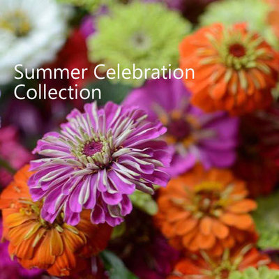 Summer Celebration Collection