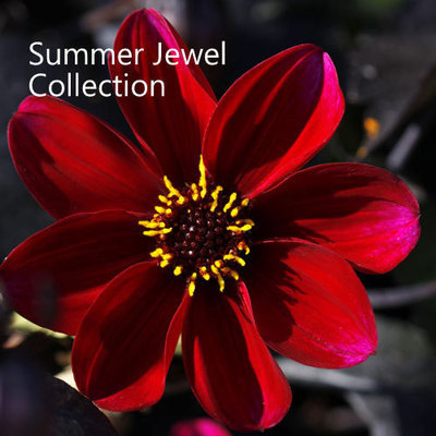 Summer Jewel Collection