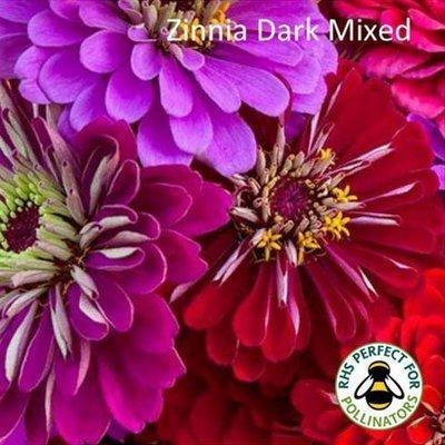 Zinnia Mixed Dark