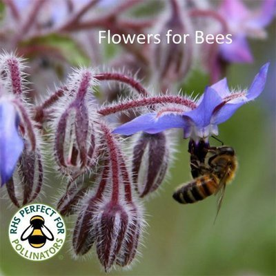 Flower Seeds for Bees