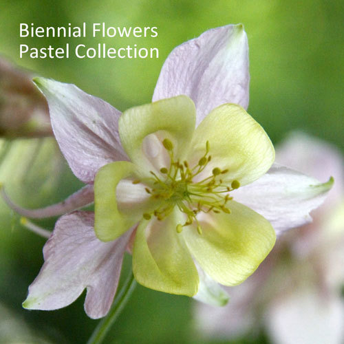 Biennial Flowers Pastel Collection 00214
