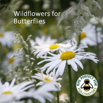 Butterfly Wildflowers Seed Collection