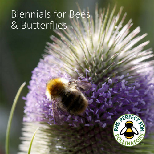 Butterfly & Bee Biennials Seed Collection 00268