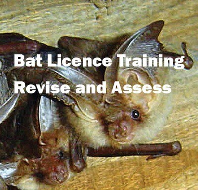 Bat Licence Training - Revise and Assess