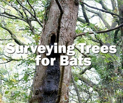 Bats: Surveying Trees for Bats (Bristol): Spring 2020