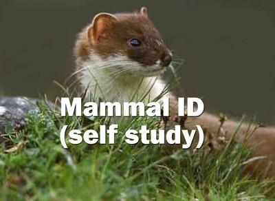 Mammal ID - Self Study Course