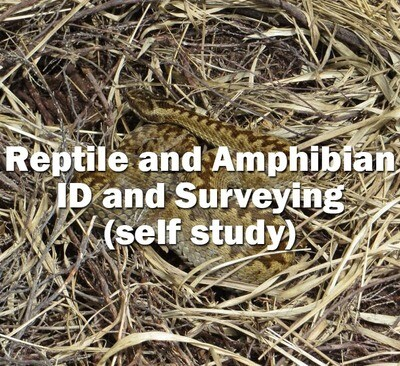 Reptile and Amphibian ID and Surveying - Self Study Course