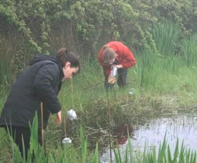 Combined Great Crested Newt Course (Dorset): Spring 2020