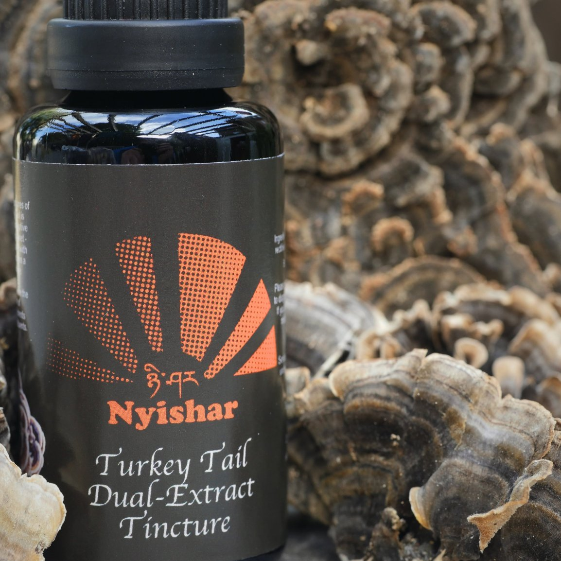 Turkey Tail Dual-Extract - 30ml 00018