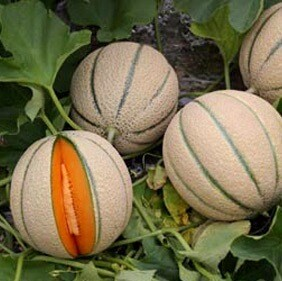 Melone (€/kg - 1,8/3kg)