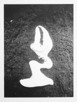 Damien Guggenheim | La Découvert