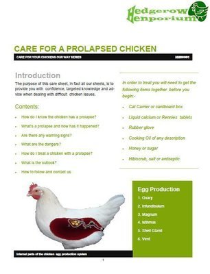 Care sheet for a prolapsed chicken - HH00001
