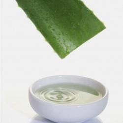 Pure Aloe Vera Gel 4 oz 70