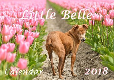 Little Belle Calendar 2018