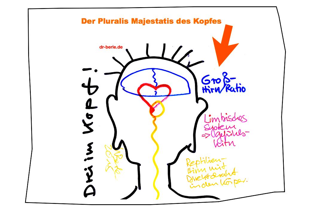 """alt=""""Neurowissenschaft im Coaching"""""""