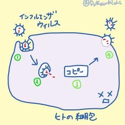 ウイルスの増殖法