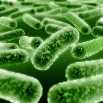 Mesleki Bulaşıcı Hastalıklar (Biyolojik Etkenler)