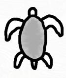Blinde Schildpad