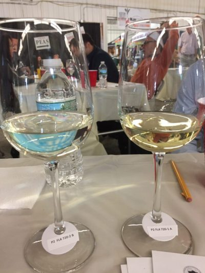 Hudson Valley Wine competition
