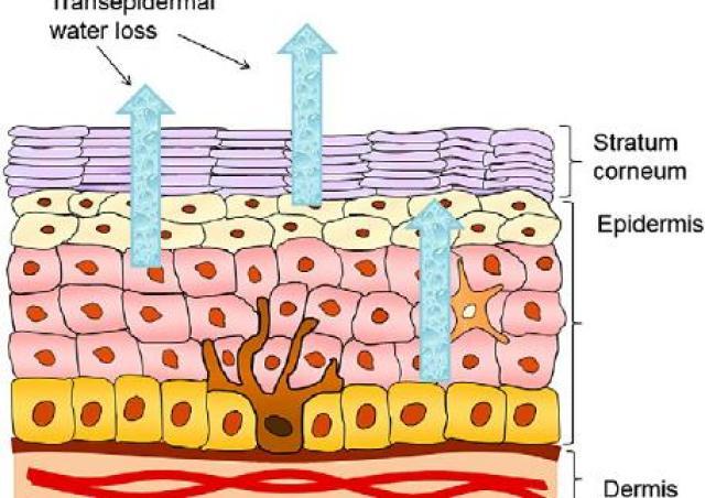 乾性肌膚怎麼保養?哪一種保養品適合乾性肌膚?乾性肌膚的保養品有哪一些成分應該要有?莊盈彥醫師告訴你!