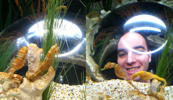 Left: Seahorses chilling out. Right: Oh my god a giant head!
