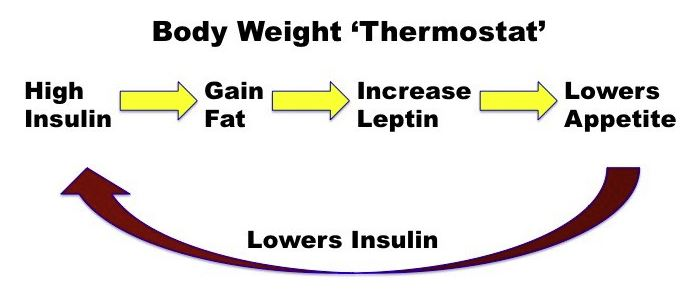 Body weight thermostat model
