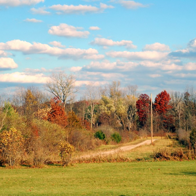 November backyard view